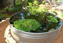 GARDEN - Pond and Pool