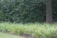 Landscape / Plants