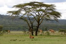 Kenya / A little piece of heaven on Earth, would love to go back there :)