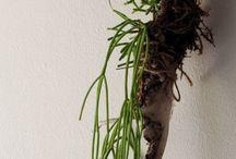 DIY: Garden - Tillandsia Crush (Air Plants)