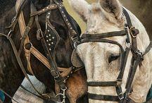 horses/mules