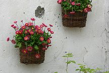 Gardens / by Elisa Hall