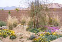 Pflanzen - Garten