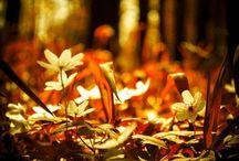 Détails forestiers / Les forêts regorgent de détails, ces arbres aux troncs particuliers, une plume laissée sur le sol, quelques feuilles d'automne...