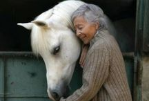 Horses / Pictures of beautiful horses