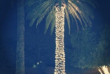 Palm Tree Christmas / by Andrea Fogt