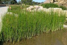 Riparian Streamside Wetland