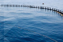Aquaculture Heating / Water heating systems for aquaculture and fish farming