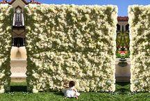 Flower Walls / by Eufloria