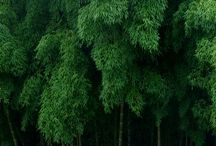Bamboo / La pianta di bambù è l'oro verde dell'uomo povero: una persona può sedersi in una casa di bambù, sotto un tetto di bambù, su una sedia ad un tavolo fatti dello stesso bambù, con un cappello di bambù in testa e sandali di bambù ai piedi... Atal Bihari Vajpayee