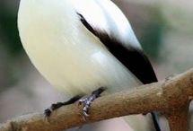 Kuşlar 1 / Beyaz