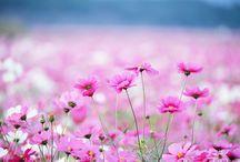 """С 8 Марта! / Компания """"Allegro-Style"""" поздравляет всех женщин с прекрасным праздником Весны!"""
