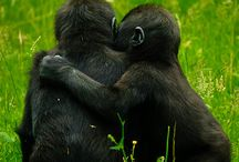 Spread the Hugs / A board full of adorable, heart-warming hugs, to help make your day better!