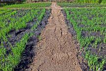 Celtic Fields / Werp een blik op onze prachtige Celtic Fields! Een authentiek voorbeeld van de prehistorische agricultuur.