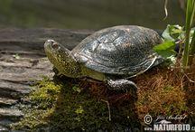 Želvy a krokodýli