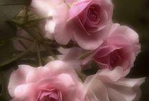Fabulous Flowers 1
