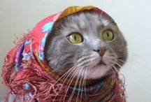 Babushka Kitties and Cats with Hats / cats with scarves or hats / by Jean Callaghan