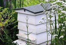 Bees / Mel