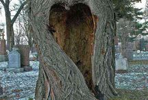 HEARTS = natural / Heart shapes found in unexpected places in nature