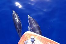 Dolphin Watching in Calabria/Italy / Dolphin Watching with Calabria Sport Fishing
