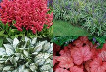 Plants / shrubs, foliage, ground cover, greenery