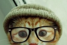 animals wearing glasses / by Kristen Knouff