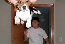 Crazy and funny pictures / Crazy and funny pictures - Photos and images
