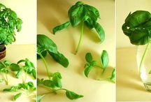 Gemüse und Kräuter