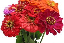 Fresh Cut Flowers / All of the Fresh Flowers you see are sold at Stevens and Son Wholesale Florist in Arvada, Colorado. They delivery locally and out of state within the United States Territory,