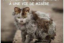 Non A La Maltraitance Des Animaux !!! / Il ne faut ni maltraiter les animaux ni les abandonner, sinon on les condamnes à une vie de misère.