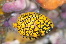 Pictures of fish on Pinterest