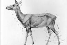 Állat anatómia