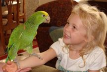 Rocks To Have A Pet Parrot / Please Check Together About Reasons Why It Rocks To Have A Pet Parrot