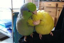 Birdies / Different Bird Species...