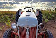 Farm Life / by Lynn White