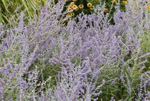 Cottage Garden / Hardy plants for zone 9