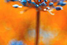 Combination wiht orange