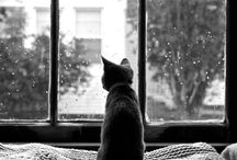 cat  by the window