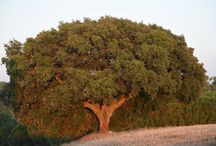 Eleggi l'Albero dell'anno 2014. I dieci alberi che concorrono per il Premio della Critica
