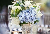 Hydrangea / Hortensie