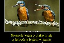 Meme Lilki:D