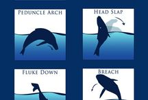 Whale Reference