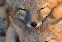 12)Animals