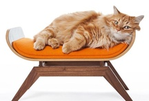 Cat Stuff / Everything i'd love to make for my cat / by Sana Khan
