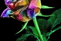 Animated multicolour rose