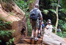 Brisbane: Hiking