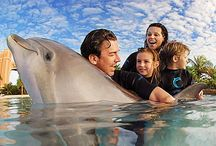Fun Family Adventures / by FamilyVacationCritic
