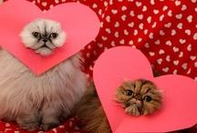 Hearts and shnugs