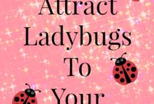 ladybug breed