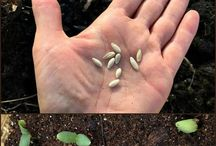 Garden - How to plant seeds